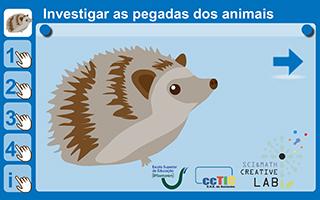 Investigar as pegadas de animais